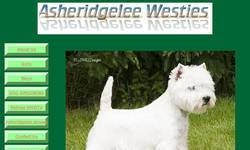 Screenshot of Asheridgelee-WHWT-UK