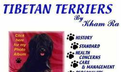 Screenshot of Tibetan Terriers By Kham Ra